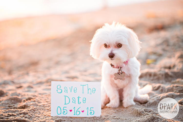 best dog engagement photo ideas
