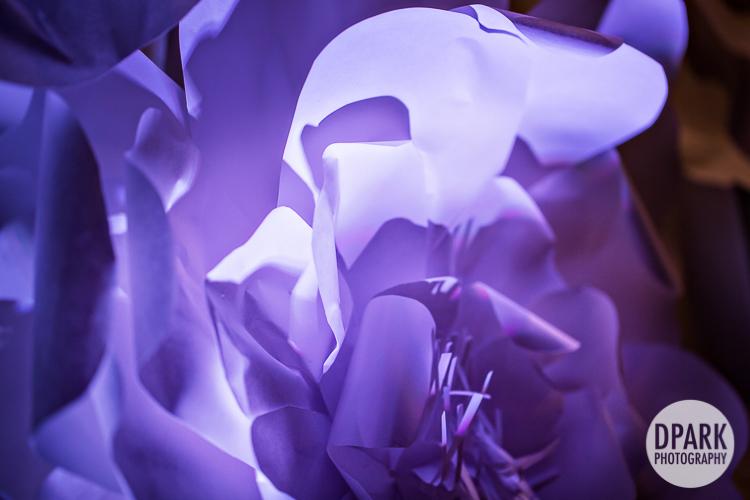 ivory white purple blue flowers