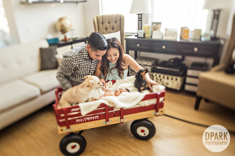 dogs-family-photo-ideas-baby
