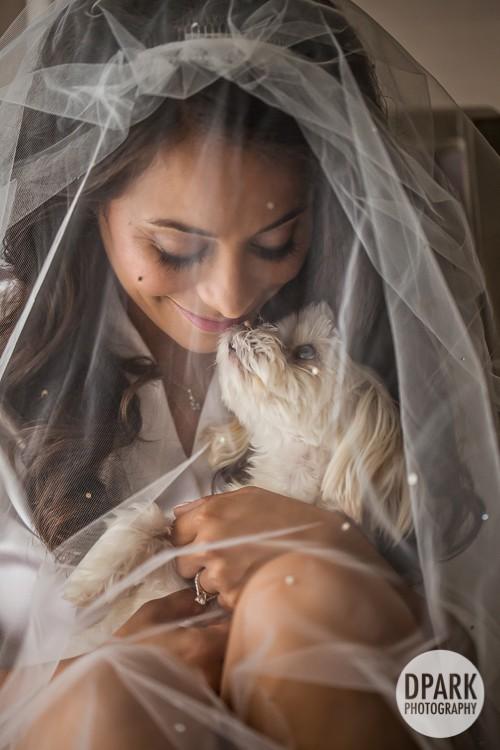 best-bride-dog-photo