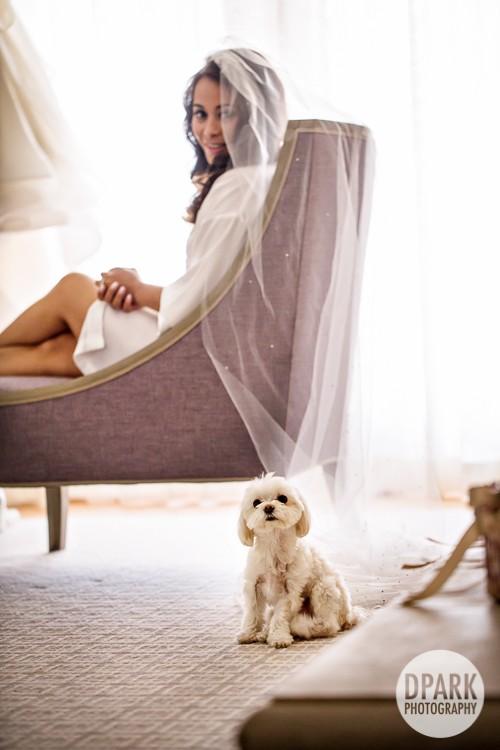 best-bride-dog-puppy-wedding-photo-ideas