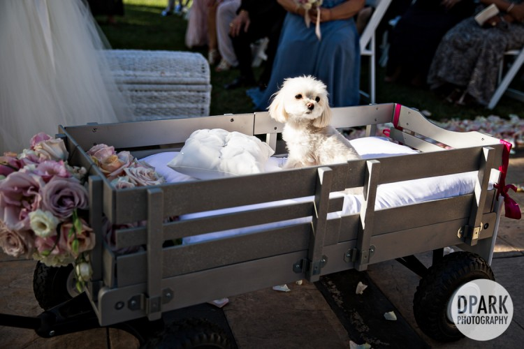 best-dog-here-comes-the-bride-wagon-photo-idea
