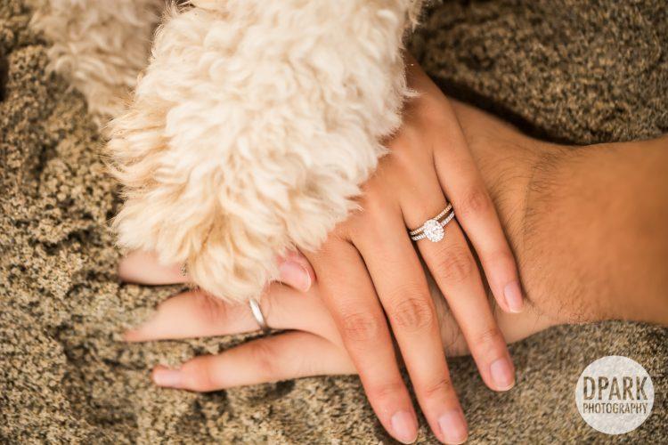dog-save-the-date-engagement-wedding-photos