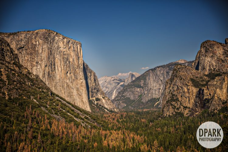 best-yosemite-wedding-videographer