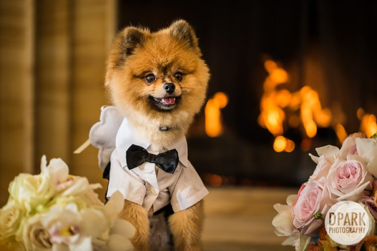 luxury-monarch-beach-resort-wedding-filmmaker-dog