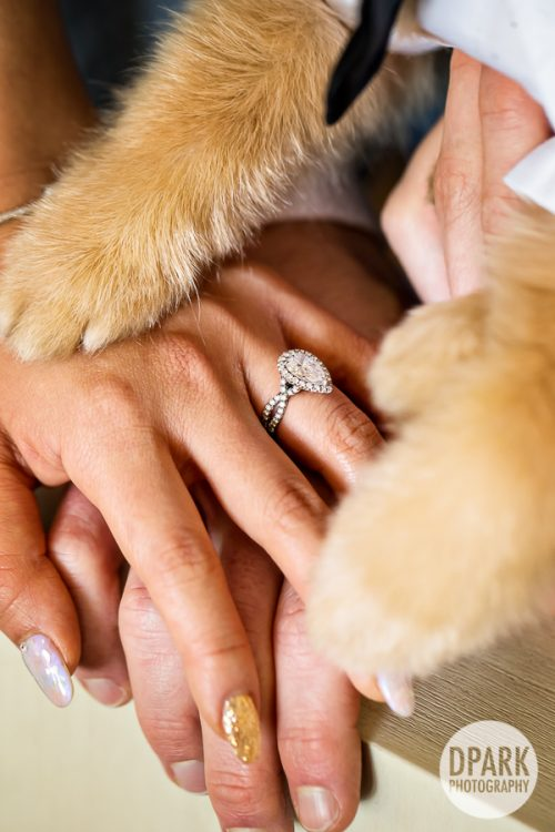 dog-bride-groom-photo-ideas-best