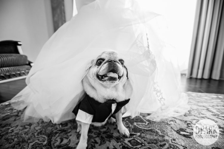 best-dog-wedding-photo-ideas