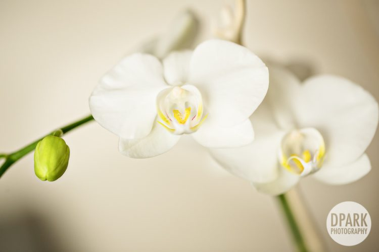 wedding-orchids