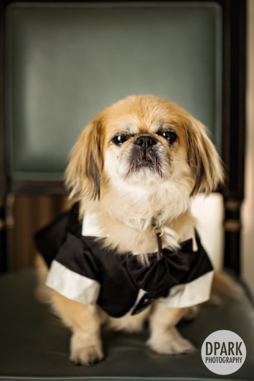 best-wedding-dog-photographer