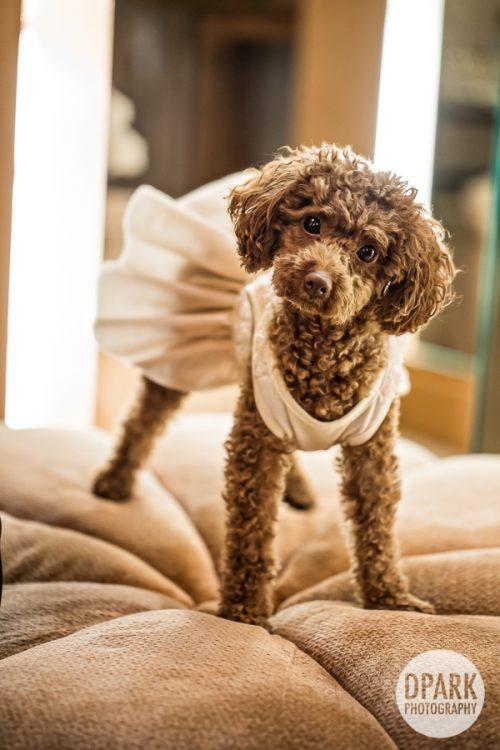 best-wedding-dog-photos
