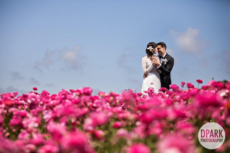 flower-fields-carlsbad-wedding-engagement-romantics-photographer