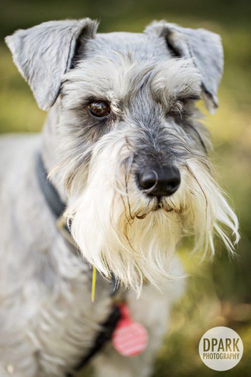 best-dog-engagement-photos