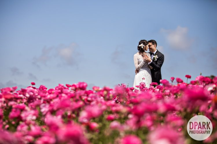 flower-fields-carlsbad-wedding-photographer
