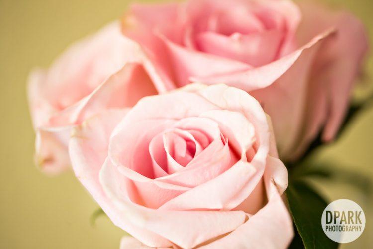 pink-roses-wedding