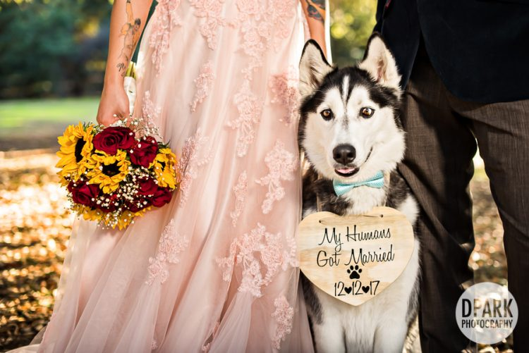 irvine-regional-park-orange-siberian-husky-dog-idea-wedding-photographer
