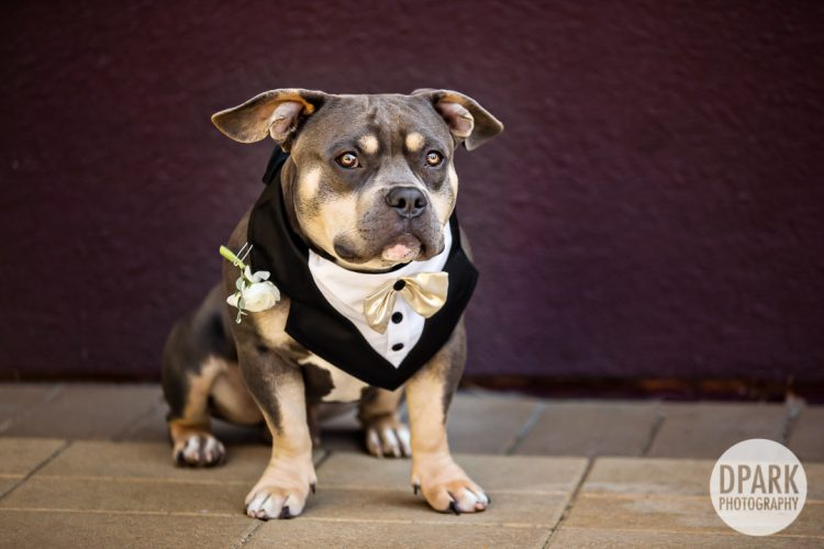 dog-wedding