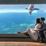 Sneak Peek | Long Beach Aquarium Engagement | Neema + Srikanth