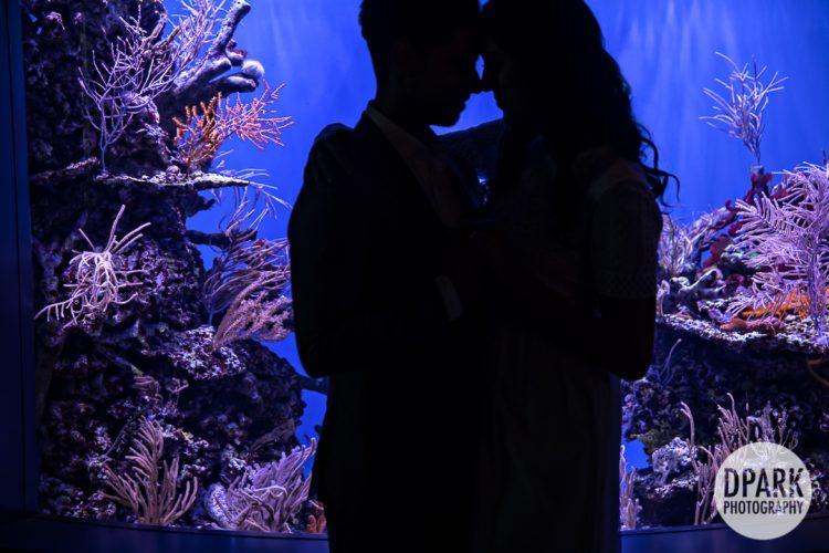 long-beach-aquarium-indian-engagement-photographer