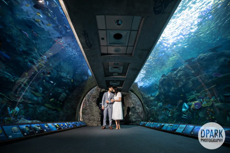 long-beach-aquarium-indian-engagement-photography