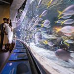 Long Beach Aquarium Engagement | Srikanth + Neema