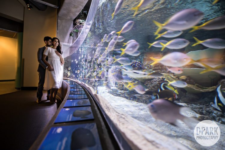 Long Beach Aquarium Engagement | Srikanth + Neema