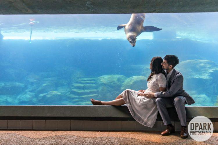 long-beach-aquarium-indian-engagement-pictures